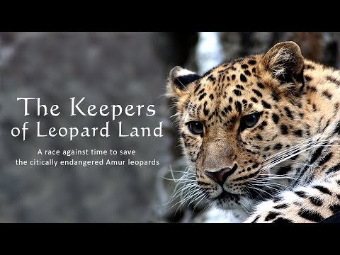 The Keepers Of Leopard Land: Endangered Lives (RT Documentary)