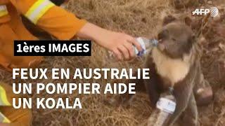 Incendies en Australie: un pompier donne de l'eau à un koala | AFP Images