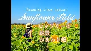 タイ・ロッブリーの絶景ひまわり畑! のんびり日帰り列車の旅 Lopburi Sunflower Field