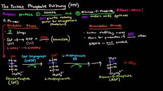 Pentose Phosphate Pathway (Part 1 of 5) - Overview and Oxidative Phase