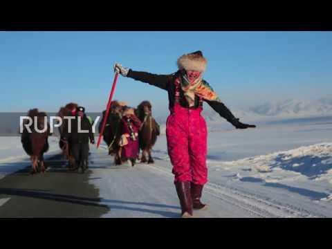 Ulaanbaatar to London – 12,000km CAMEL CARAVAN promotes Mongolian nomadic culture