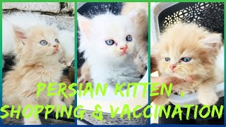 Getting Persian Kittens Home | Best Pet Shop in LUCKNOW | Vaccination | WhatsApp  8076738269