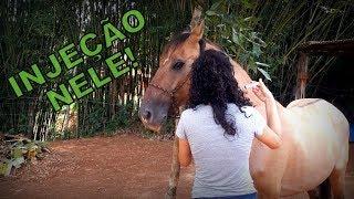 Um músculo dói meu cavalo por depois charley da de que panturrilha