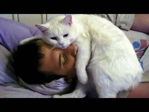 CUTE CATS MORNING CALL THEIR OWNER | Top Funny Cat Compilation
