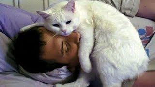 CUTE CATS MORNING CALL THEIR OWNER   Top Funny Cat Compilation