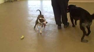 Dogs Trust West London: The Easter Bunny And Friends
