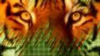 CELTIC TIGER (Damien Dempsey)