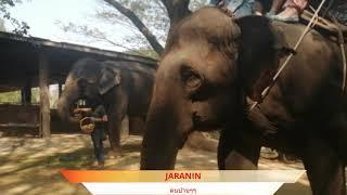 ช้าง ช้าง ช้าง น้องเคยเห็นช้างหรือปล่าว..🐘🐘🐘😍😍Thai elephant