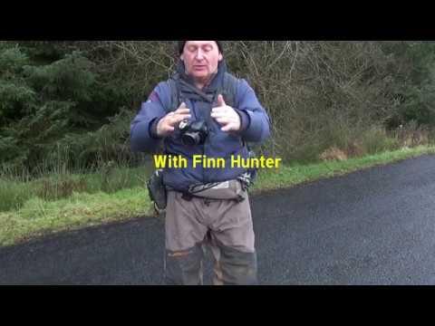 WILDLIFE OF IRELAND { SALMON }