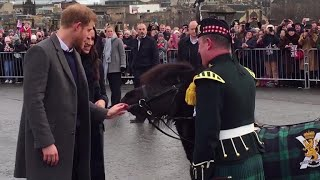 Pony tries to bite Prince Harry during royal couple