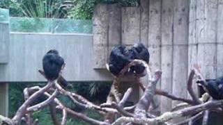 Die Toten Hosen - Sonntags im Zoo