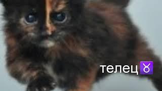 Гороскоп/знаки зодиака ♈♉♊♋♌♍♎♏♐♑♒♓ коты. Кто ты по гороскопу  из котят кошек и котов.