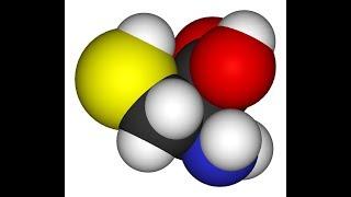 Cysteine   Sulfur, Protein Synthesis, Detox, Beta Keratin, Nails, Skin, Hair, Collagen, Energy