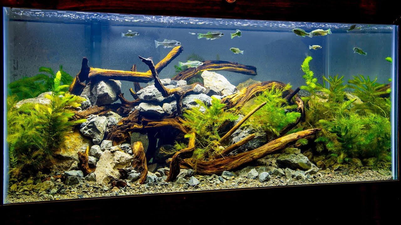River Basin Biotype Aquascape for Endangered Fish