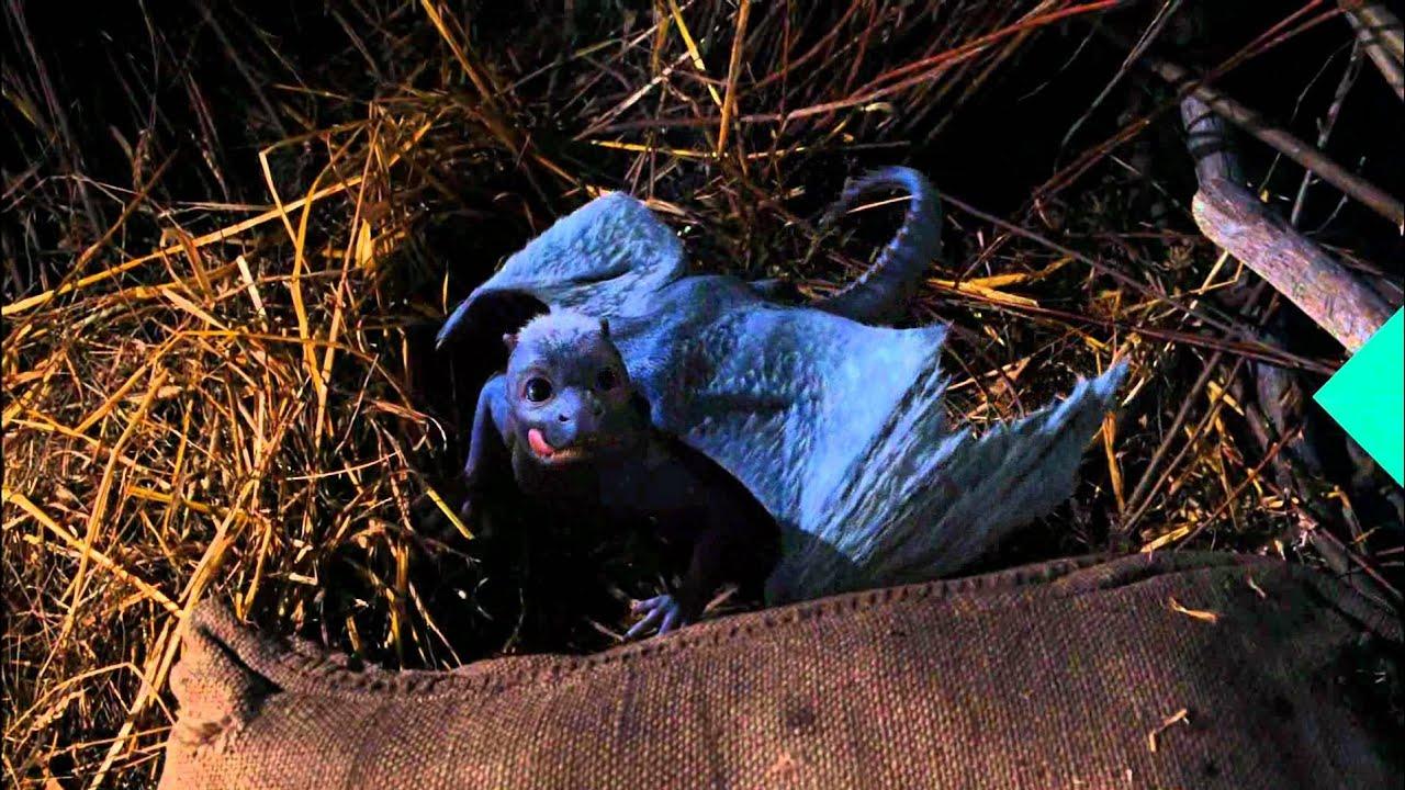Download Eragon (1/5) Movie CLIP - Feeding a Dragon (2006) HD