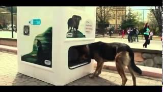 """""""Sokak Dogs"""" Máquina expendedora de comida para perros y gatos en Turquía."""