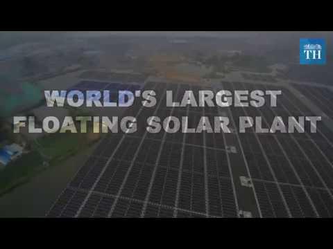 worlds-largest-floating-plant-plant