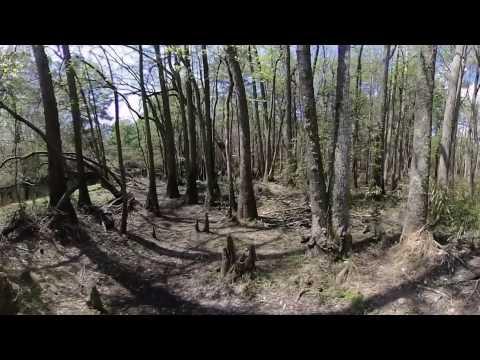 2D-360° Lumber River State Park