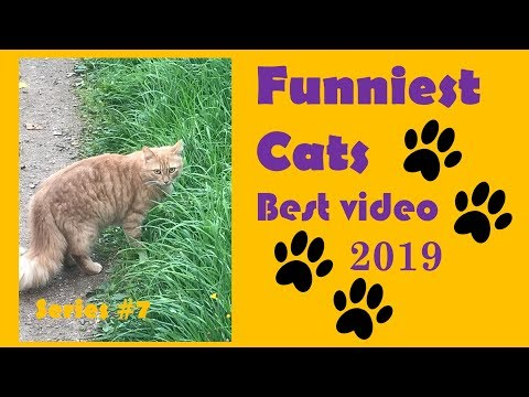 Funny Cats Best video (Funniest) 2019 Series #7