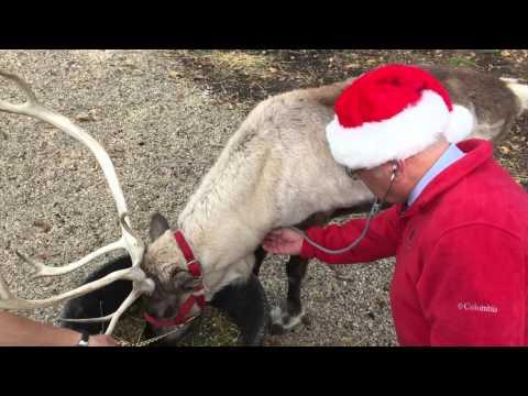 Thumbnail image for 'Preventive Veterinary Care for Santa's Reindeer from AVMA'