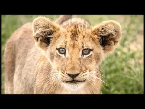 African Wildlife AIB Part 64