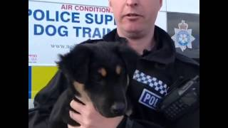 Rare Breed Canine Cadet For North Yorkshire Police