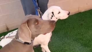 Lady & Heidi Adopted