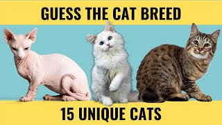 Cat Quiz  Guess the Cat Breed  15 picture quiz questions