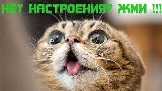 СБОРНИК ПРИКОЛОВ-№1