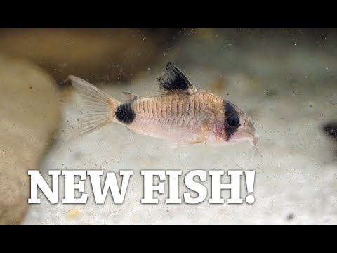 How I maintain my Sand Substrate Aquarium (and NEW FISH)