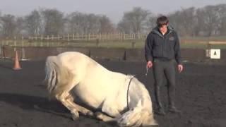 At Eğitimi