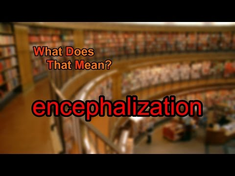 What does encephalization mean?