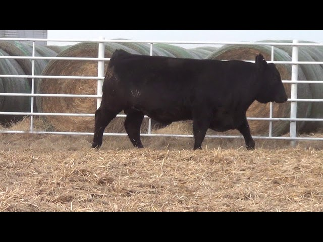Express Ranches Lot 172