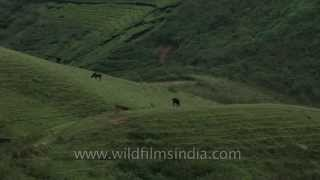 Rolling green hills and tea plantations - Munnar
