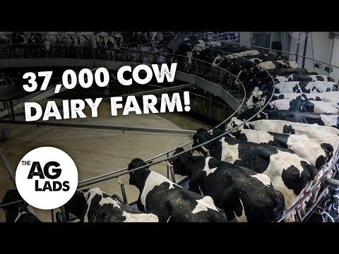 Huge scale dairy farming at Fair Oaks Farms