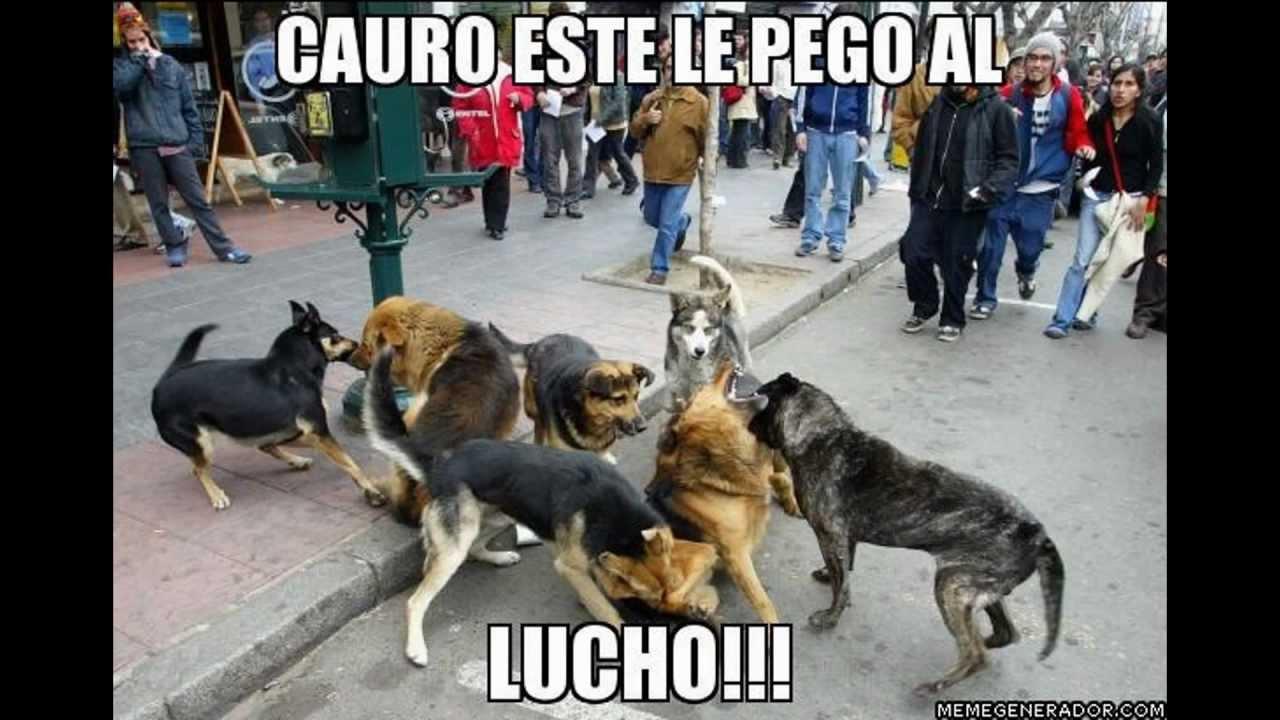 Recopilacion de las Imágenes del Perro de Lucho | www