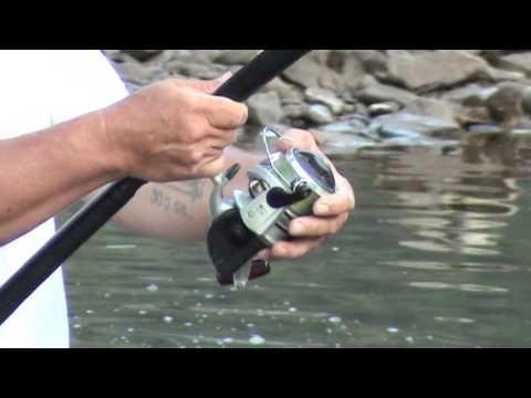 River Drina - Catfish fishing - Mali Zvornik - Serbia - V.Rakic Antonic