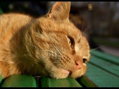 Мочекаменная болезнь котов как вылечить