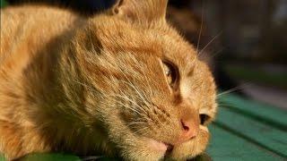 ???Как Вылечить Кота от Мочекаменной Болезни???