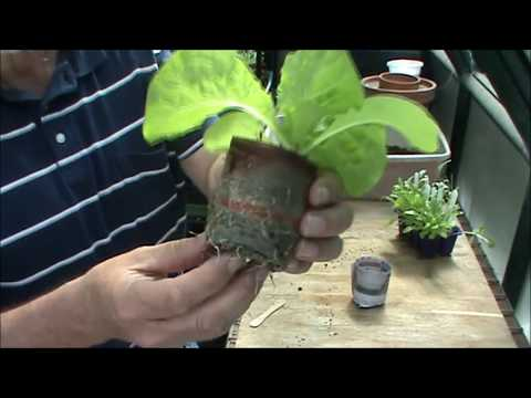 Making and Using Newspaper Pots