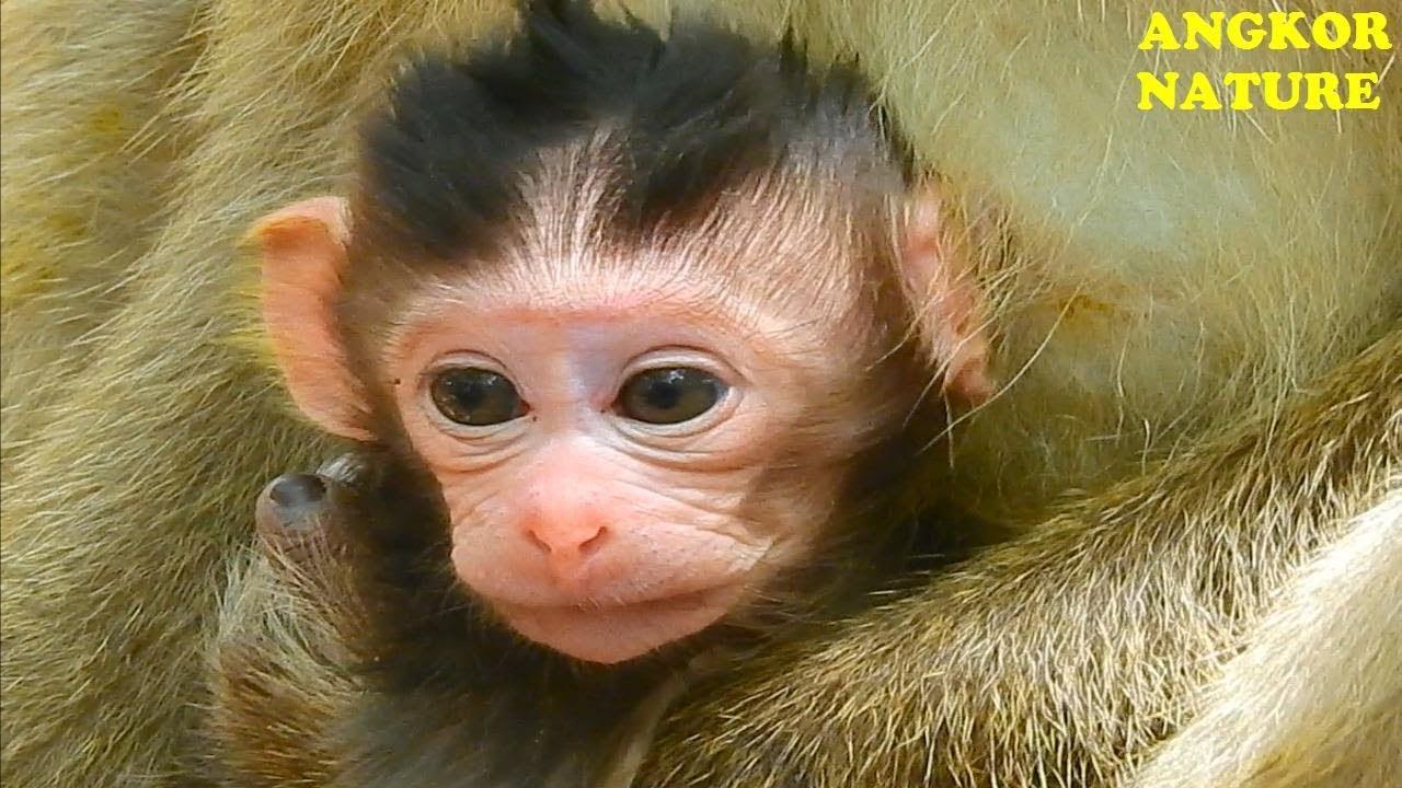 Super cute baby monkey Billiona, Billiona baby monkey ...