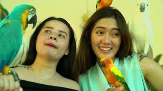 COV - Gemes Banget Main Sama Burung Beo  (13/10/19) Part1
