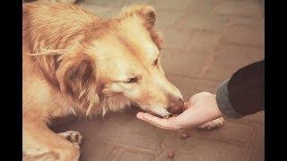 Стоит ли кормить бродячих собак