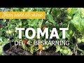 Tomater från sådd till skörd - Del 4: Beskärning