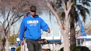 Dog Training San Jose - Bay Area K9 Trainer - Cali K9®