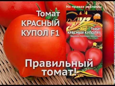 Красный купол— правильный томат! 10 секунд