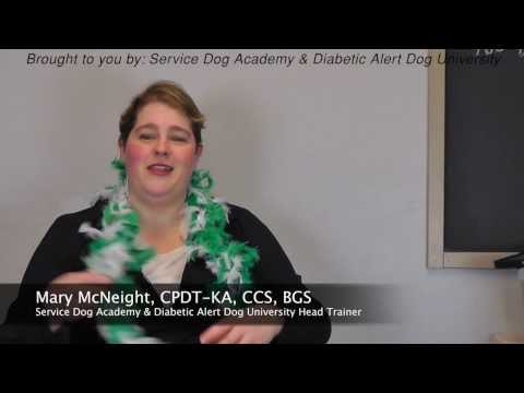 Diabetic Alert Dog Q&A Training Videos - Does Insurance Cover Diabetic Alert Dogs