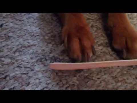 Filing My Dog's Nails
