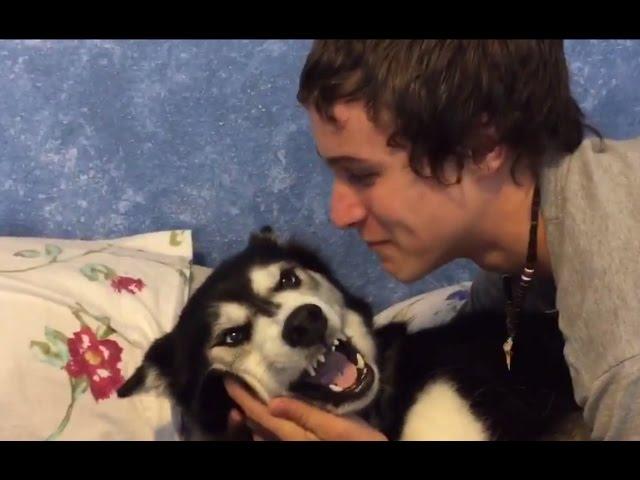 Siberian Husky, Tala, Doesn't want a Kiss