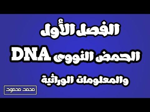 الحمض النووى DNA والمعلومات الوراثية